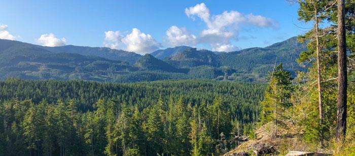 Flott natur på Vancouver Island. foto