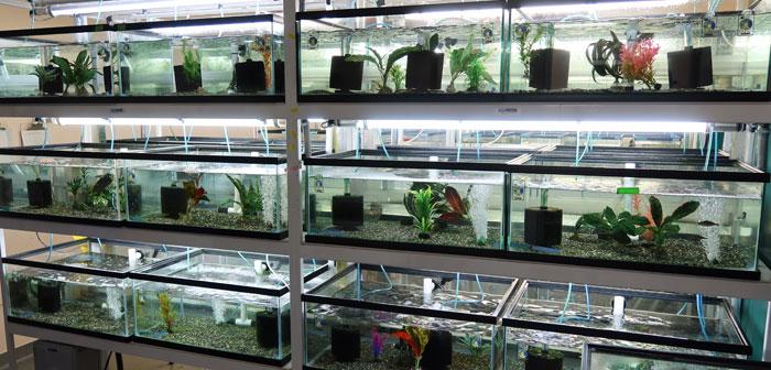 Akvarier. foto
