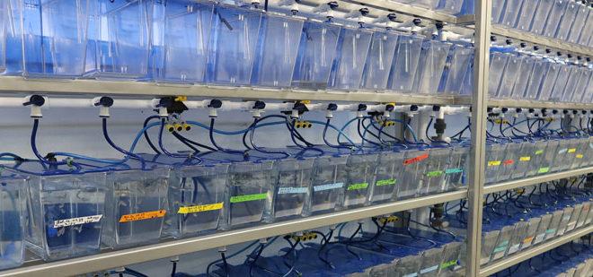Akvarier på lab.