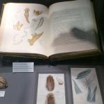 I et hjørne av museet litt beskjedent lagt til var noen få av originale til Alder og Hancock utstilt.
