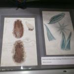 Her ser vi noen av de originale tegningene og skissene som Albany Hancock bearbeidet