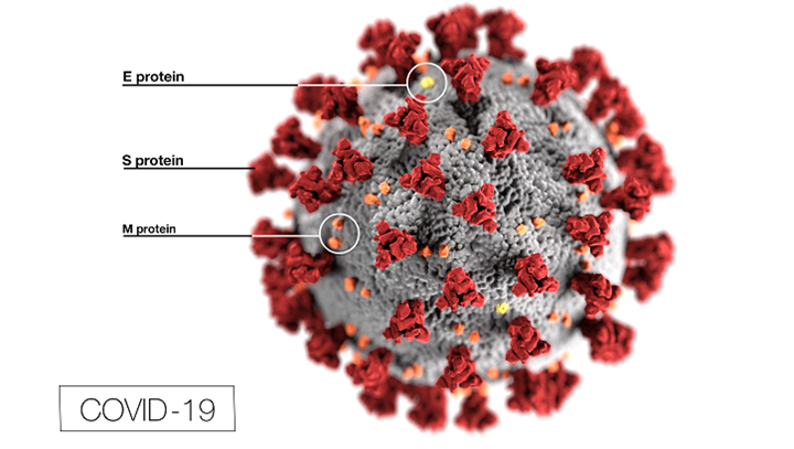 Illustration of a Corona-virus from Centers for Disease Control and Prevention (Public domain)