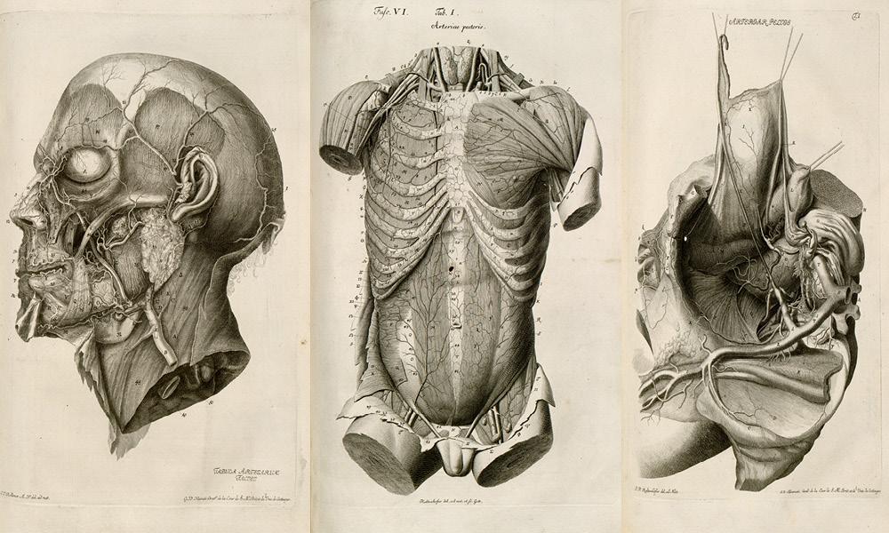 tre tegninger; hodeskalle, barnetorso, bekken med arterier