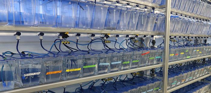 Besøk ved Bamfield Marine Sciences Centre (BMSC)