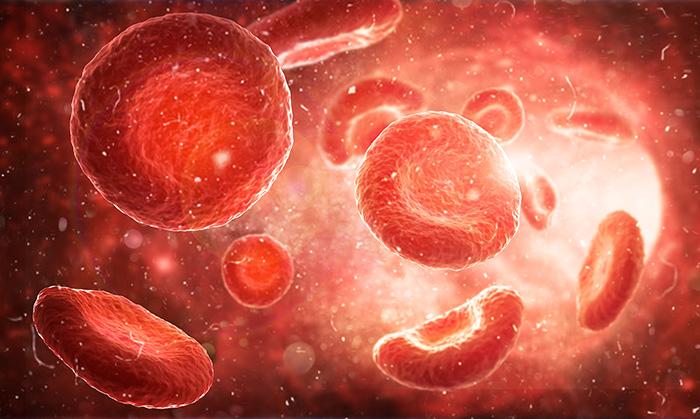 Spør en forsker: Hvor lang kan cellene i kroppen vår bli?