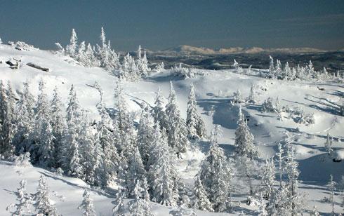 Vinterbilde fra Bymarka