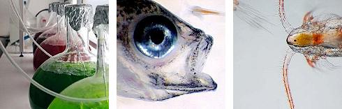 lab - fish - organism. Photos.