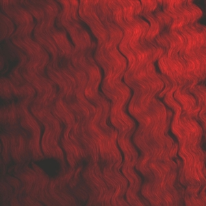 Figure 1. Collagen fibers in the chordae tendinae which attach the heart valve to the papillary muscles.