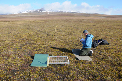 Monitoring Zackenberg. Photo: Kristian Hassel.