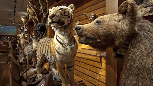 Noah's ark Photo: Åge Hojem