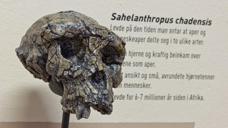 Humankind Skull Photo: Åge Hojem