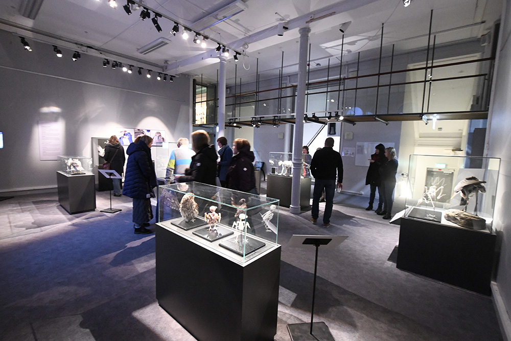 Picture from within the exhibition.