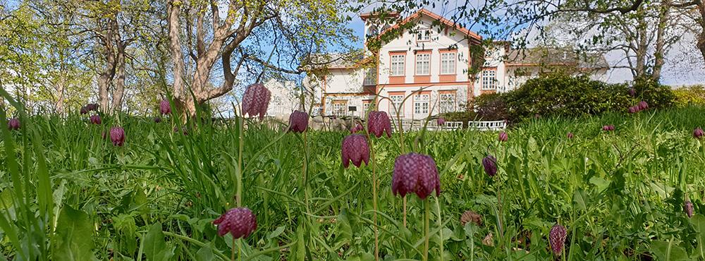 Ringve botaniske hage. Foto: Vibekke Vange, NTNU Vitenskapsmuseet