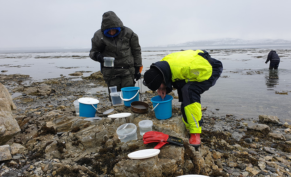Scientists do fieldwork on the shore.