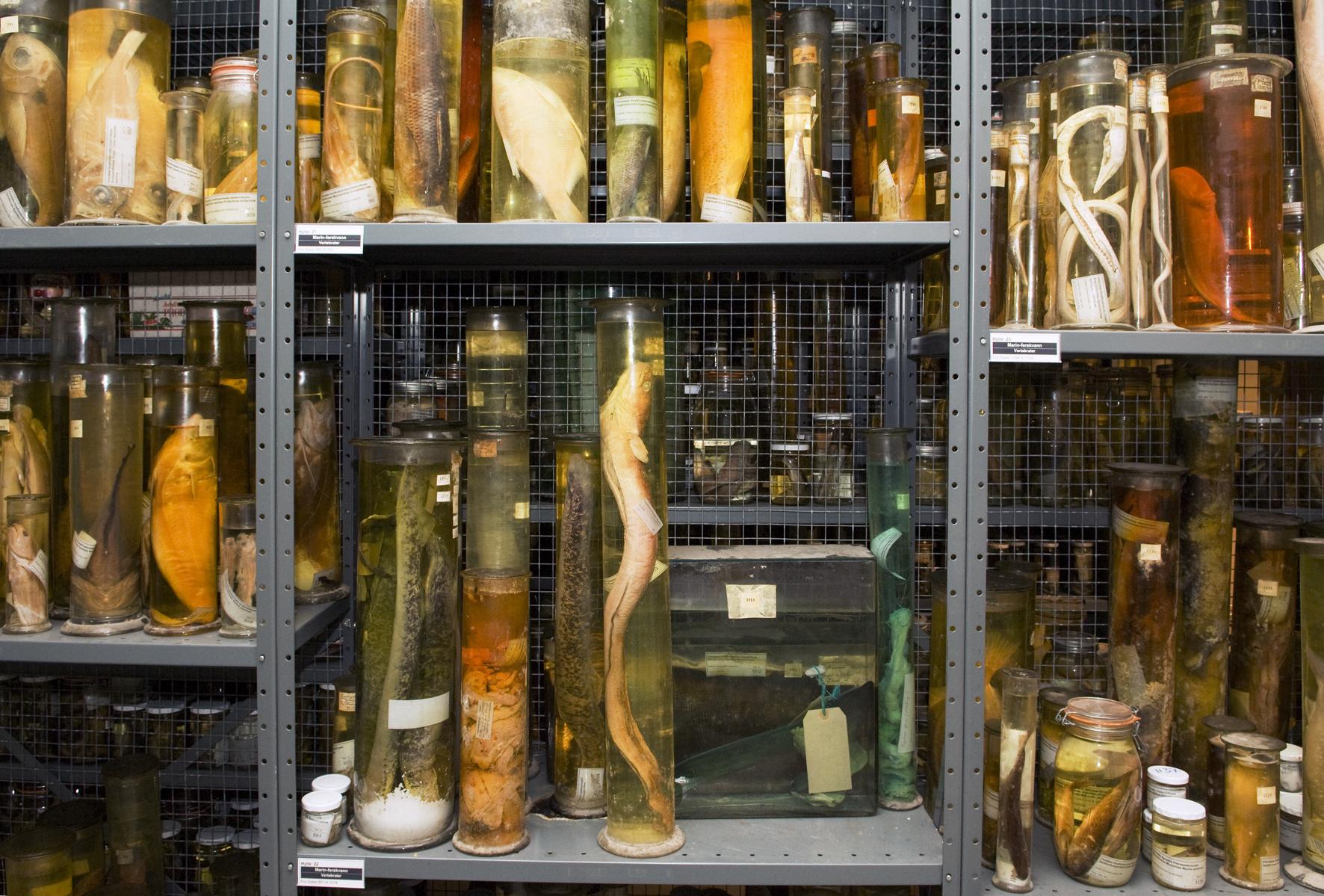 Storage facilities. Photo: NTNU Museum.