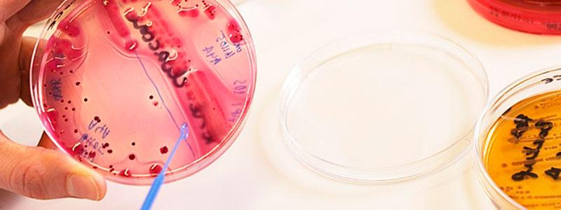 Bioingeniør_Lab_Bakterier_Undervisning