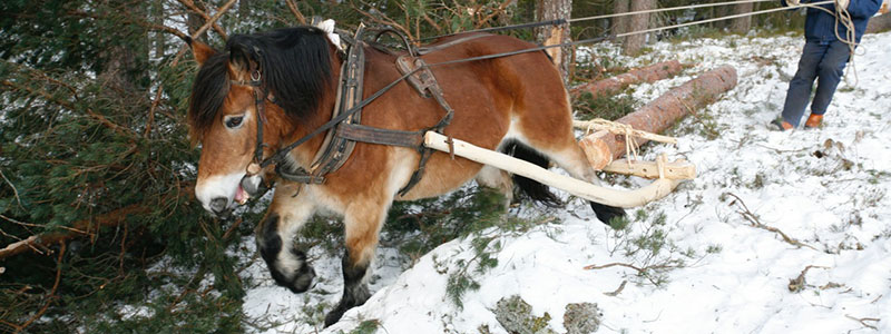 TradisjoneltBygghåndverk_Arbeidsplass_Hest
