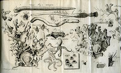 DKNVS Skrifter, tegnede koraller, sjøstjerner og børstemarker. Foto: NTNU Universitetsbiblioteket