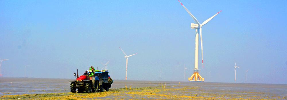 Vindmøllefarm i Kina. Foto: Marius Korsnes