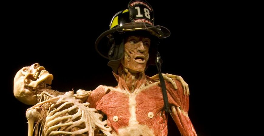 BODY WORLDS Vital. Credit: Gunther von Hagens