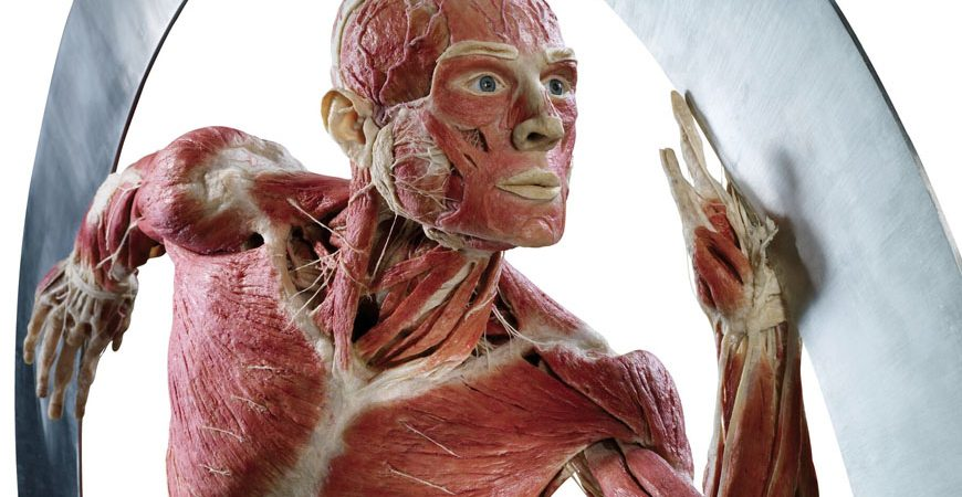 Body World. Credit: Gunther von Hagens