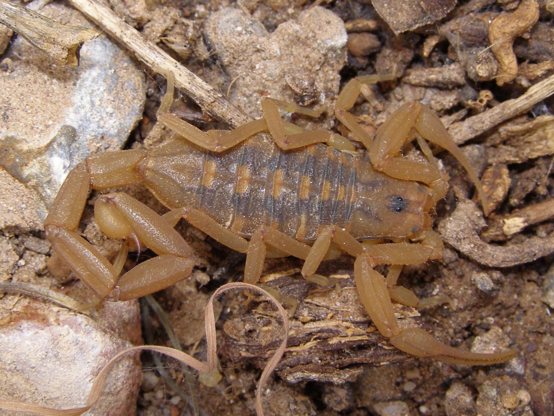 картинки древесных скорпионов время