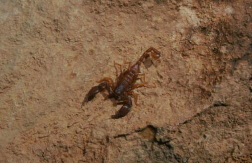 The Scorpion Files - European Scorpions