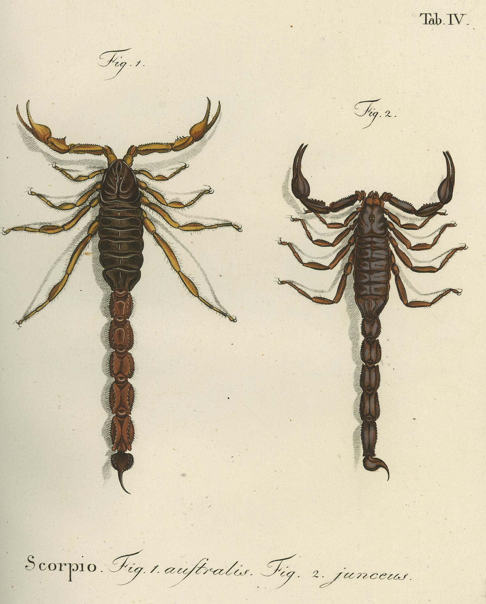 The Scorpion Files - J. F. W. Herbst\'s Natursystem der Ungeflügelten ...