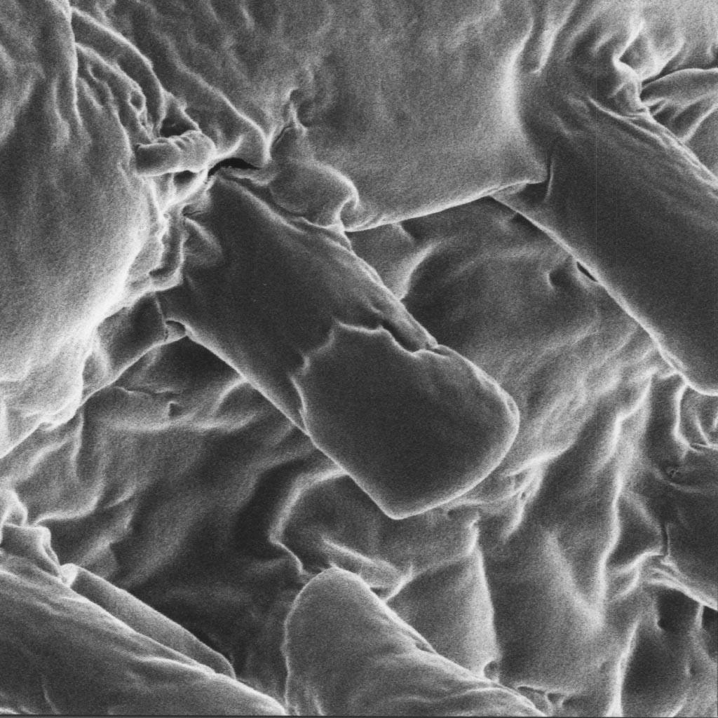 Scorpion Under Microscope